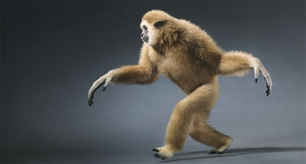 more than human animal photography tim flach 29 More Than Human Project by Tim Flach