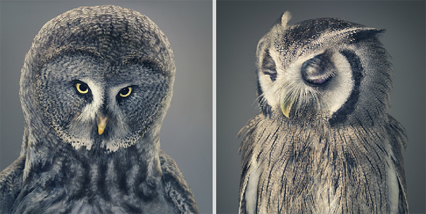 more than human animal photography tim flach 4 More Than Human Project by Tim Flach