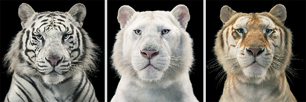more than human animal photography tim flach 6 More Than Human Project by Tim Flach