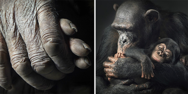 more than human animal photography tim flach 8 More Than Human Project by Tim Flach