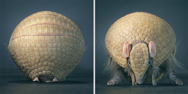 more than human animal photography tim flach 9 More Than Human Project by Tim Flach