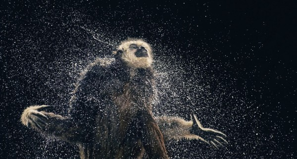 more than human tim flach 11 More Than Human Project by Tim Flach