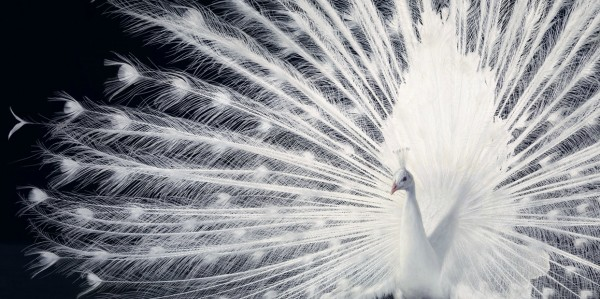 more than human tim flach 24 More Than Human Project by Tim Flach