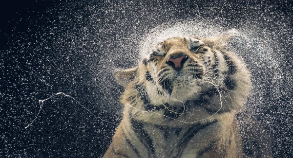more than human tim flach 28 More Than Human Project by Tim Flach