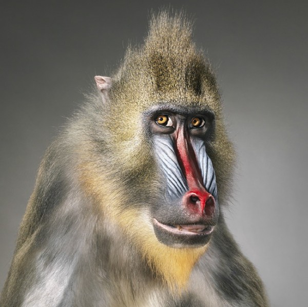 more than human tim flach 3 More Than Human Project by Tim Flach